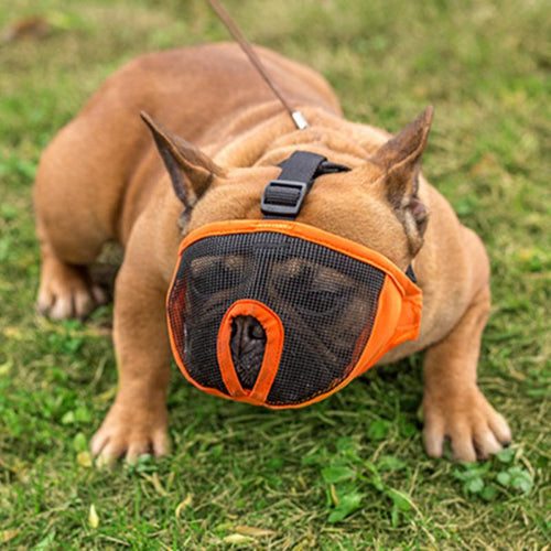 Breathable French Bulldog Muzzle