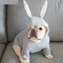 Rabbit Hoodie for French bulldog