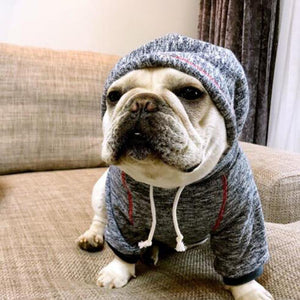 Lovely Hoodie for Frenchies
