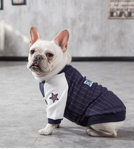 Baseball  Jacket for Frenchie