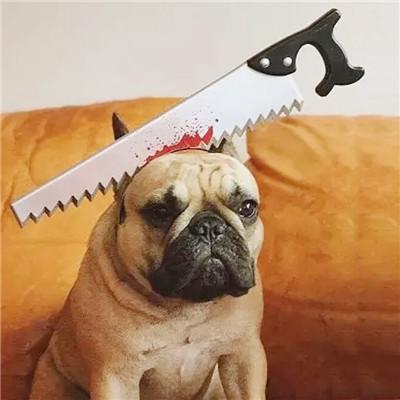 Halloween accessories for french bulldog