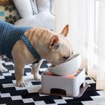 Ceramics Bowl for Frenchies (WS41) - frenchie Shop