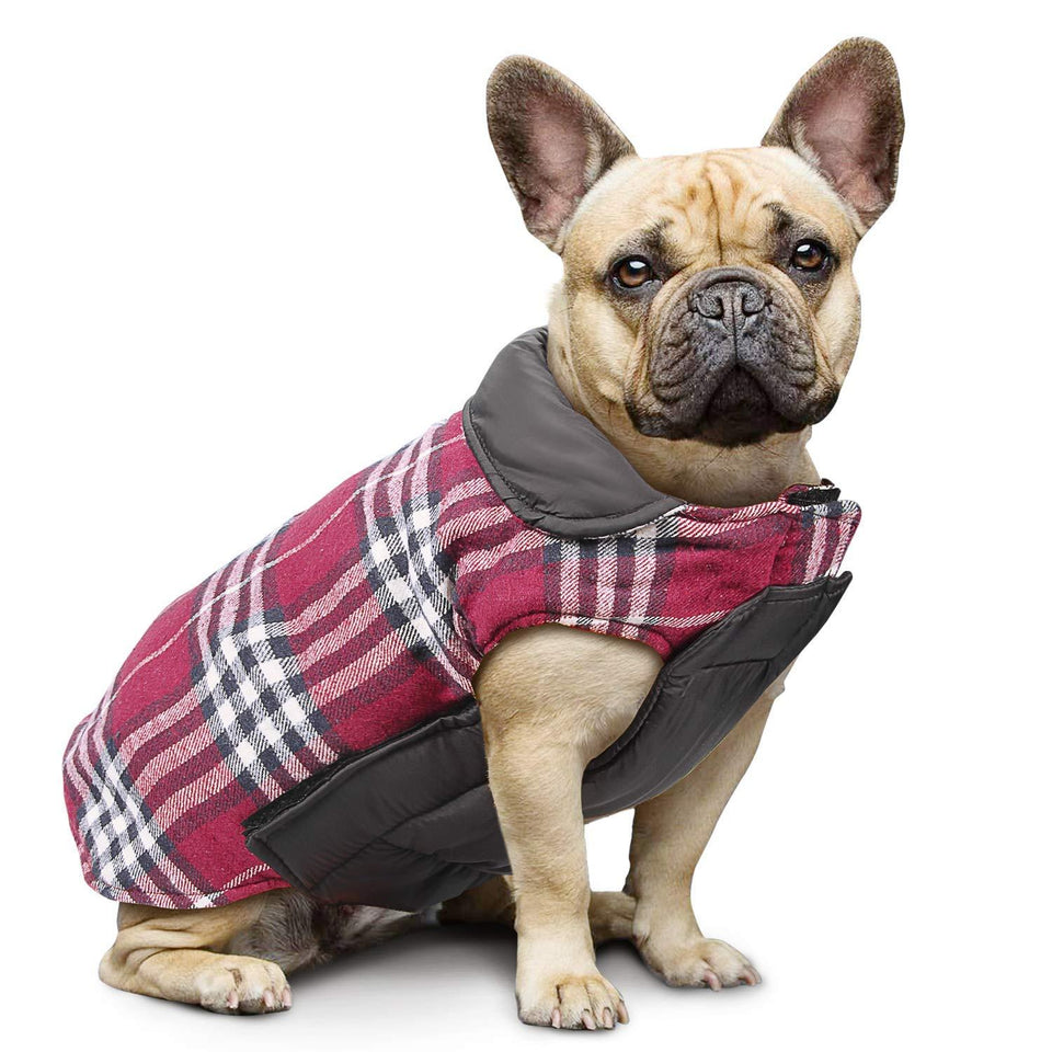 French bulldog  Jacket
