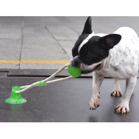 Suction Frenchie TugToy™ (WS38) - Frenchie Bulldog Shop