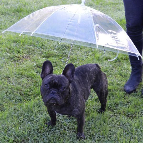 Umbrella for Frenchies - frenchie Shop