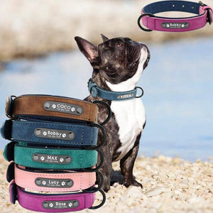 Personalized French Bulldog Collar