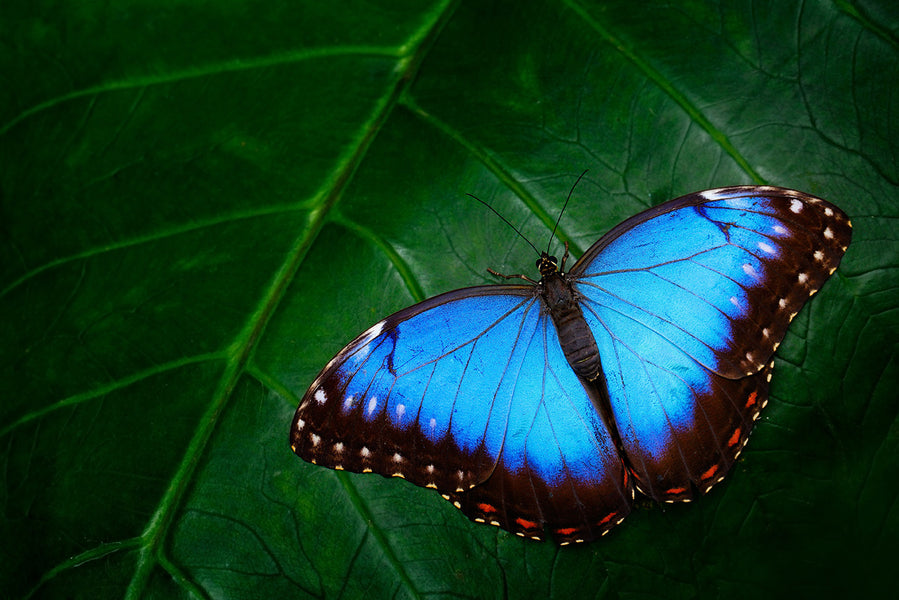 5 Easy Ways You Can Protect Butterflies