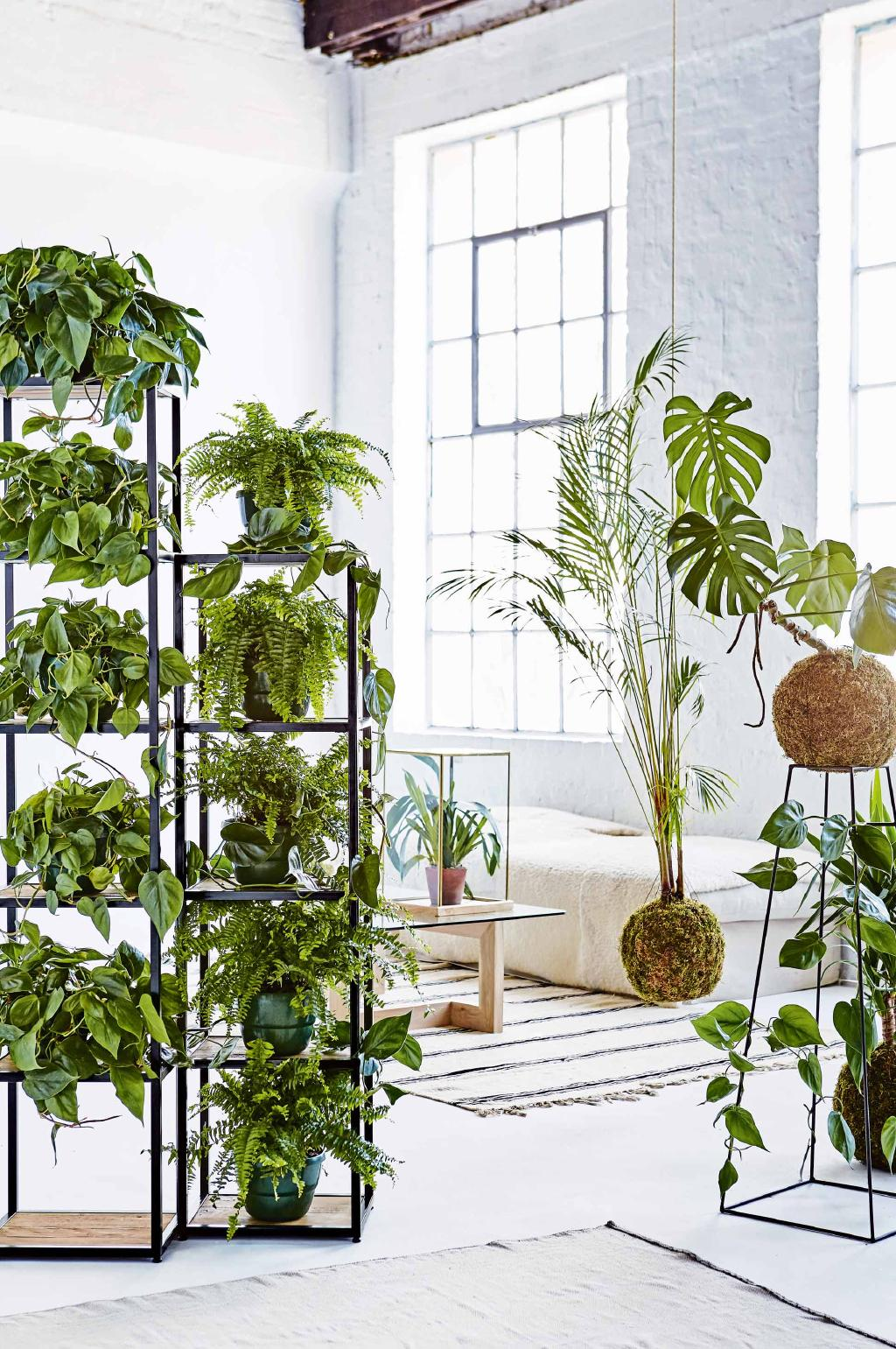 Free-Standing-Shelves-with-Pot-Plants