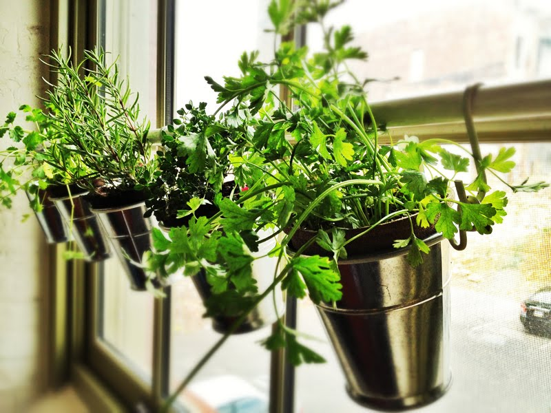 Herbs suspended by a tension rod in front of a window