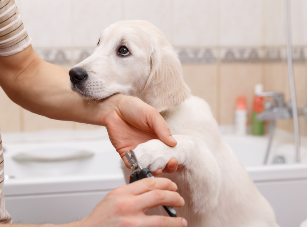 Dog Grooming Advice That Works