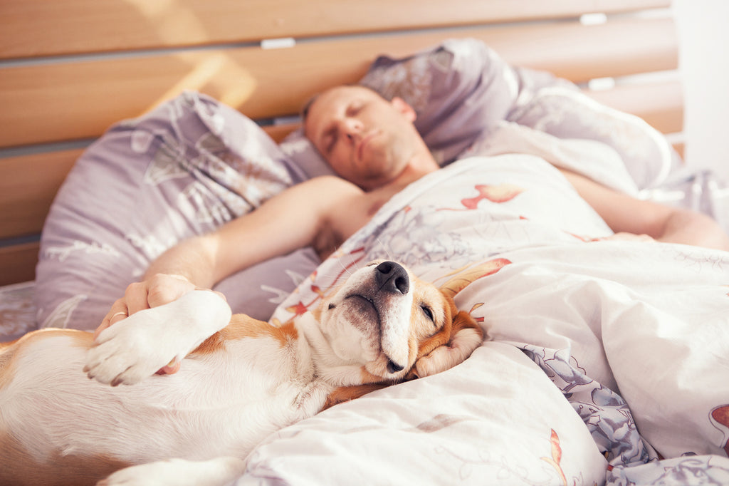 Pros and Cons of Having Dogs Sleep in Bed with You