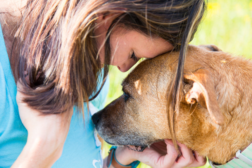 Building a Strong Relationship with Your Dog