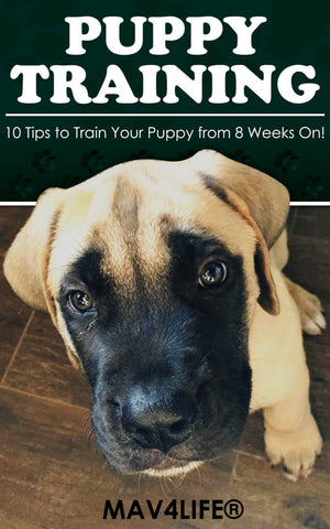 Puppy Training: 10 Tips to Train Your Puppy from 8 Weeks On!