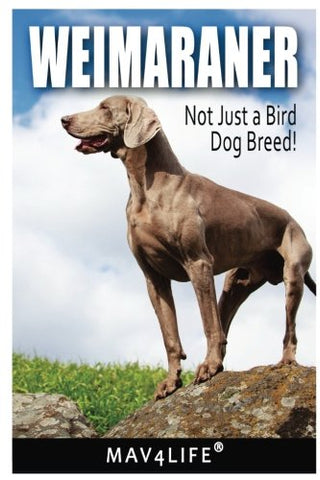 Weimaraner: Not Just a Bird Dog Breed!