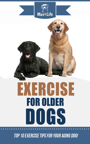 Exercise for Older Dogs: Top 10 Exercise Tips for Your Aging Dog!