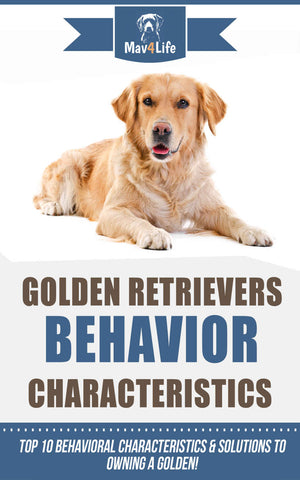Golden Retrievers Behavior Characteristics: Top 10 Behavioral Characteristics & Solutions to Owning a Golden!