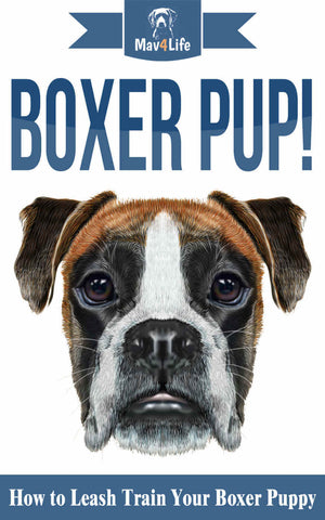 Boxer Pup! : How to Leash Train Your Boxer Puppy