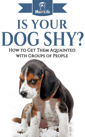 Is Your Dog Shy?: How to Get Them Acquainted with Groups of People