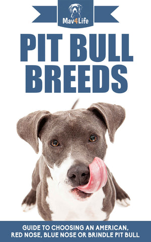 Pit Bull Breeds: Guide to Choosing an American, Red Nose, Blue Nose or Brindle Pit Bull