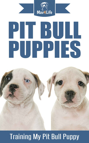 Pit Bull Puppies: Training My Pit Bull Puppy