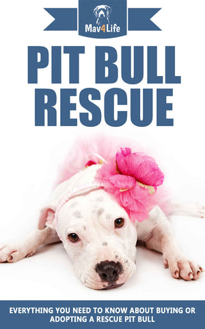 Pit Bull Rescue: Everything You Need To Know about Buying or Adopting a Rescue Pit Bull