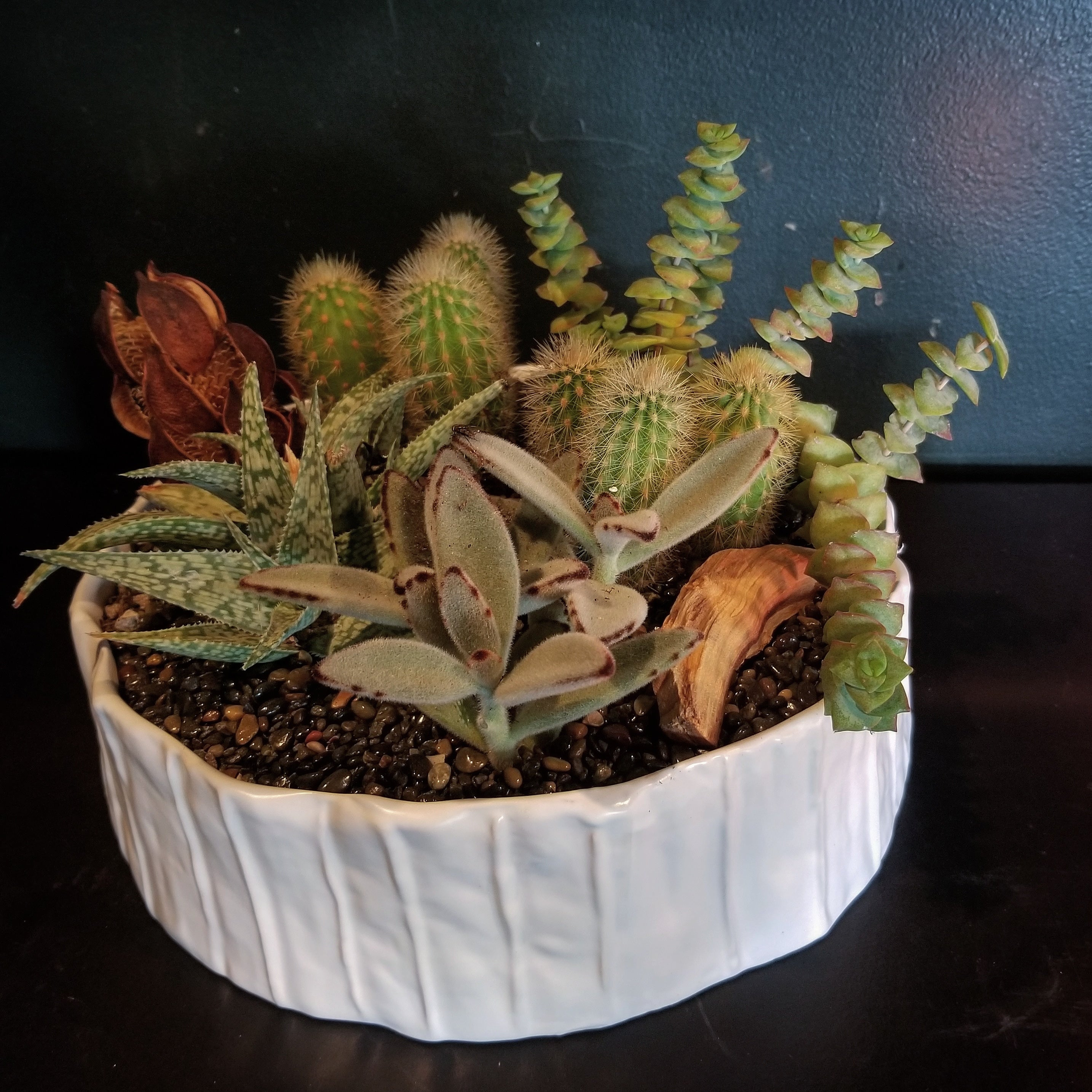 Mixed Succulent Planter $175