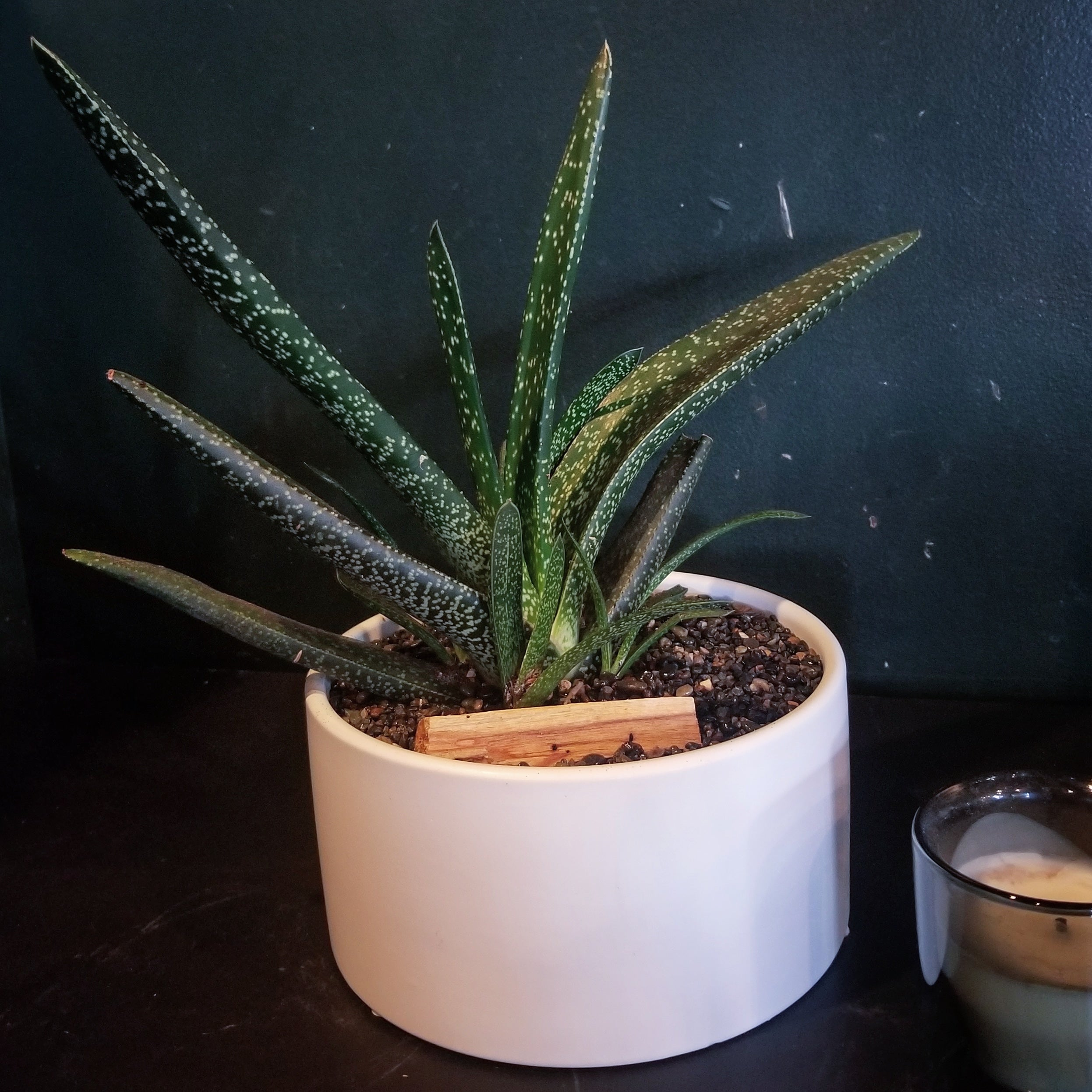 Single Succulent Planter $75