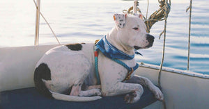 Venice Sunrise Rope Harness - SHOP HARX