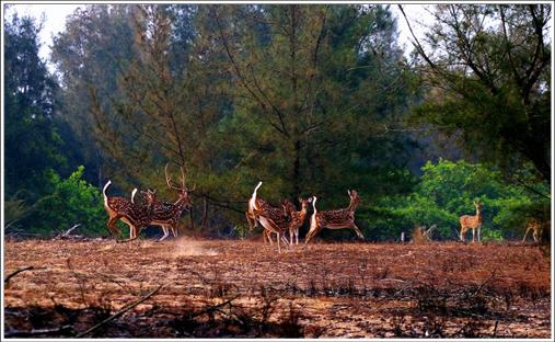 Balukhand-Konark Wildlife Sanctuary