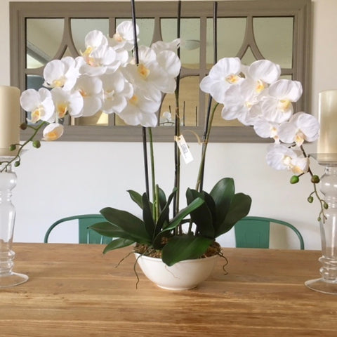 White & Yellow orchid