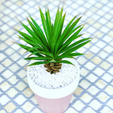 Potted Agave succulent