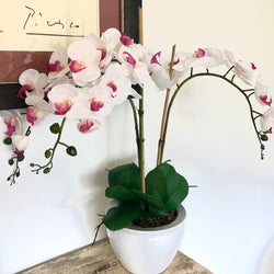 White & Pink Orchid - 3 stem arrangement