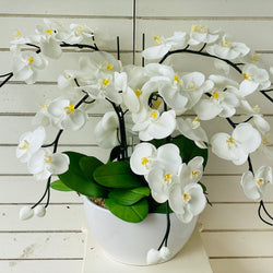 White & Yellow Orchid - 5 stem arrangement