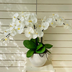 White & Yellow Orchid - 3 stem arrangement