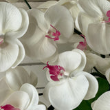 White & Pink Orchid - single stem arrangement