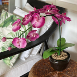 Purple Orchid - Single stem arrangement