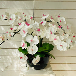 White & Pink Orchid - 5 stem arrangement