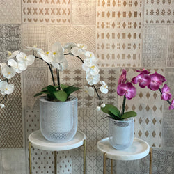 Single & double stem orchid in lanterns