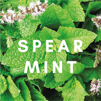 Spearmint Concentrate