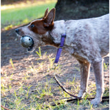 Orbee-Tuff Diamond Plate Ball By Planet Dog Sold By Pupology Boutique