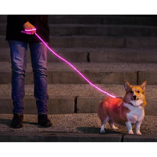 LED Fiber Optics Leash by Nitey Leash Sold By Pupology Dog Boutique