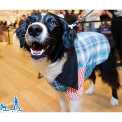 Plaid Dog Shirt by Furrever Doggies Sold by Pupology Dog Boutique