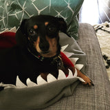 Shark snuggle dog bed by Pupology Dog Boutique Austin, Texas