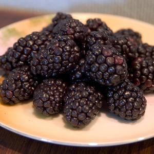 Rubus occidentalis 'Bristol'-#2 Container<br />Bristol Black Raspberry