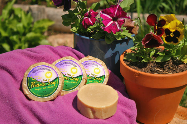 Probiotic Soap - 3 Bars Lavender Homemade Natural Shampoo, General Purpose - thatfamilyshop.com