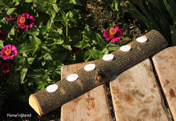 20 Inch 6 Candle Rustic Log Holder Rustic Wedding Cabin Decor Table Piece Slab Ash Wood - thatfamilyshop.com