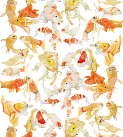 Koi on White Wallpaper