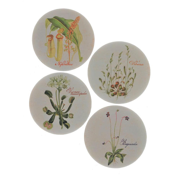 4-Pack Insectivorous Plants Coasters