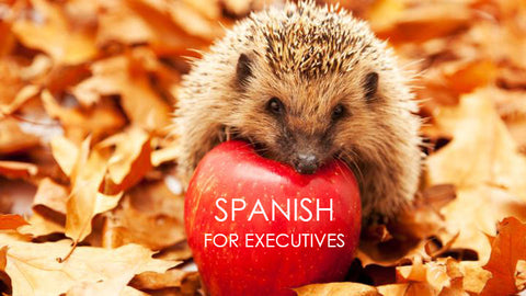 B2B pilot programme Spanish For Executives