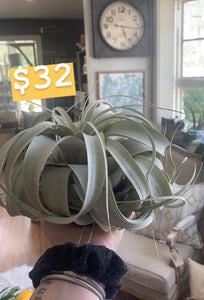 XL Airplant